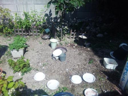 6月6日 植木鉢2 SH3J0741