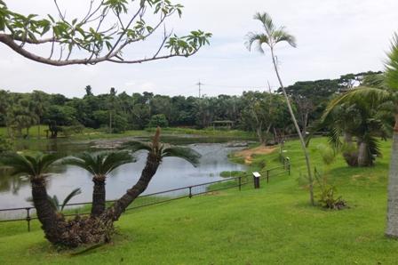 小浜島:はいむるぶし;庭園・水牛