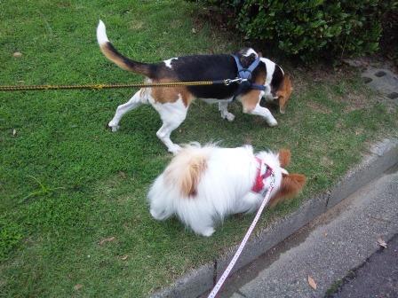 仲良く並んで歩いてます