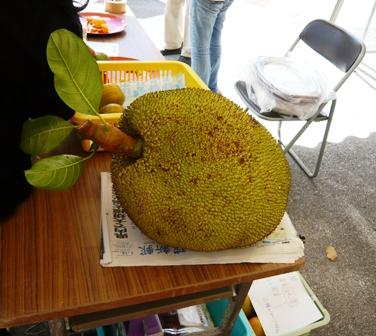 22 熱研一般公開:熱帯果樹ハウス見学(パラミツ)