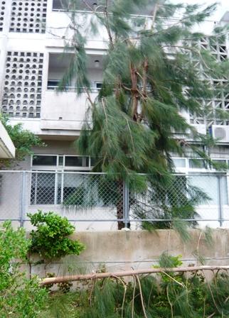 台風17号の被害