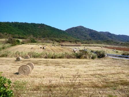 太朗窯:手前の放牧地