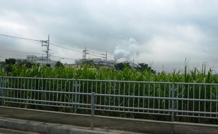 二男石垣旅行:製糖工場稼働中