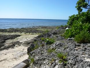 リハロウビーチ:ビーチ2