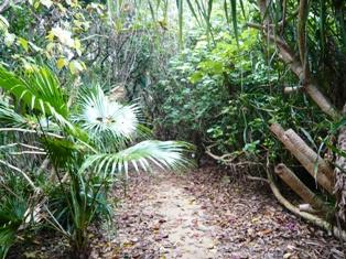 舟蔵の里:庭園4