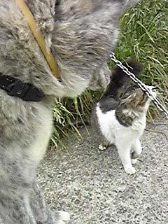 ふぶとネコ2
