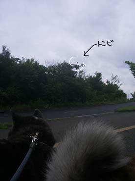 曇のち雨1