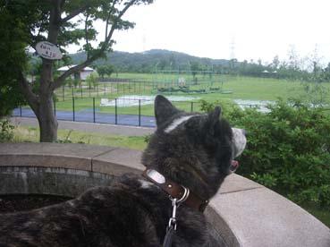 曇のち雨2