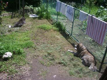 草刈り庭1