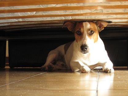 ベッドの下が好き