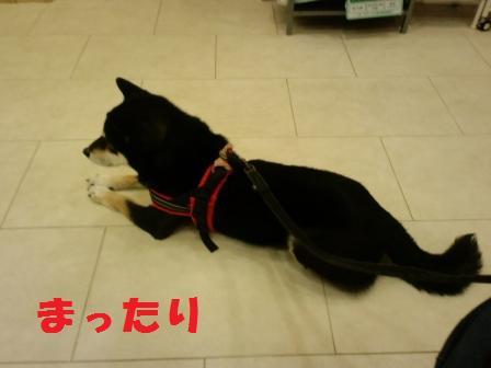 blog8314.jpg