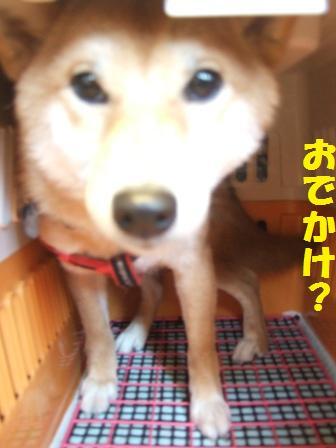 blog8331.jpg