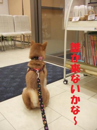 blog8338.jpg