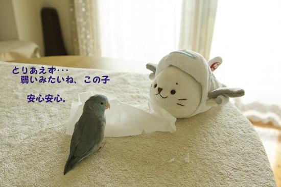 _S1W2844_20130117224128.jpg