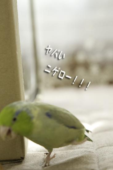 _S1W3170_20130112202435.jpg