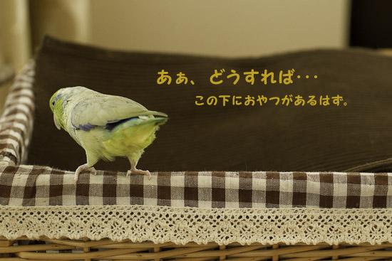 _S1W3697.jpg