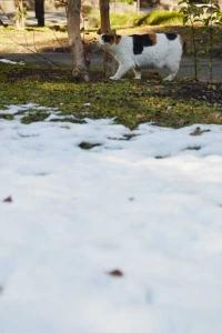 雪猫 Sakura-chan The Cat and Snow
