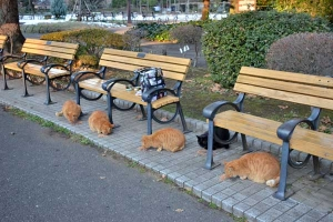 Outdoor Cats Breakfast Scene