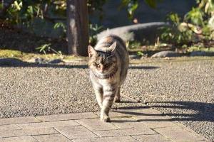 Invader Cat
