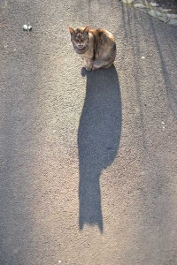 Cat and Shadow