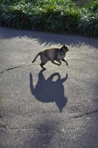 Running Cat and Its Shadow