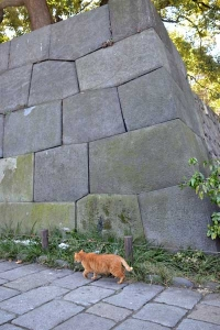 Ai-chan The Cat Walking By The Stone Wall