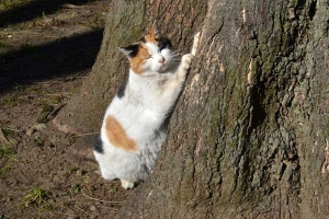 Sakura-chan The Cat Scratching The Tree