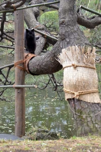 Black Cat in a Tree
