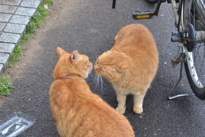 Ai-chan The Cat (left) Kissing Mate