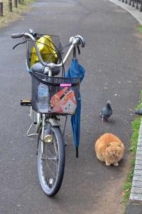Cat and Caregiver's Bike