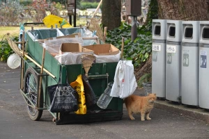 Cat, Cleaner's Cart and Trash Bins