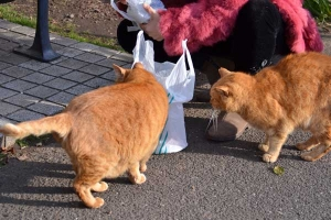 Ai-chan The Cat (left) at Breakfast