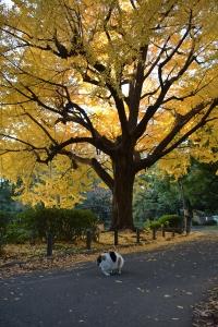 Tokyo Park Cat and Golden Ginkgo Tree