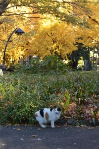 Tokyo Park Cat and Golden Ginkgo Trees