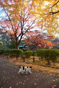 Tokyo Park Cat on a Colorful Day