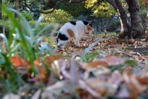 Tokyo Park Cat Licking