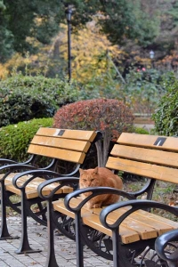 Tokyo Park Cat on The Bench