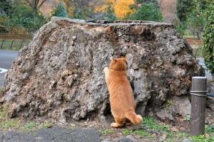 Tokyo Park Cat Scratching Tree Stump