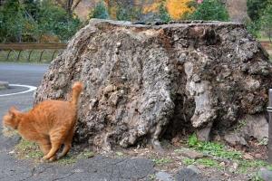 Tokyo Park Cat and Tree Stump