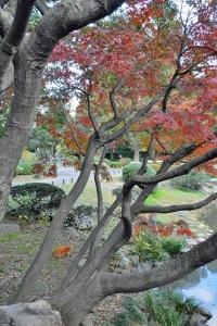 Park Cat and Momiji Maple Trees