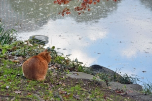 Park Cat By The Pond