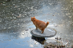 Park Cat In The Pond
