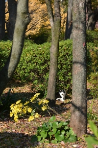 Cat on a Sunny Day In The Trees