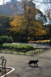Black Cat Crossing The Path
