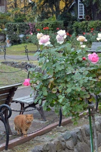 Tokyo Park Cat and December Roses