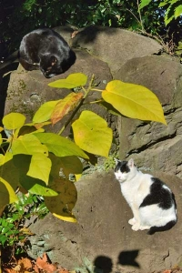 Cats and Yellow Leaves