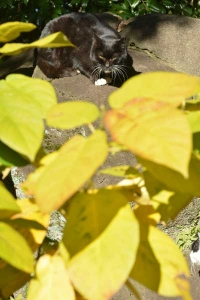Cat and Yellow Leaves