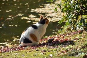 Tokyo Park Cat Sakura-chan