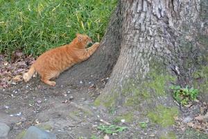 Tokyo Park Cat