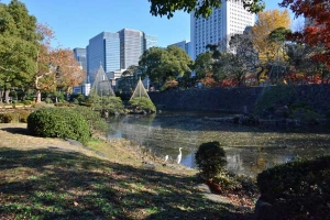 Tokyo Park Scene with Cat and Egrets